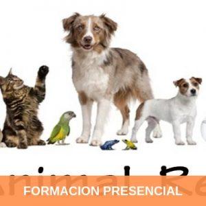 Formación Terapeuta Holístico de Animales